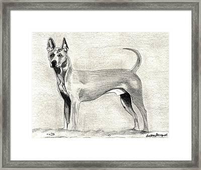 Thai Ridgeback Dog Framed Print by Olde Time  Mercantile