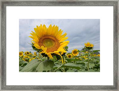 Thank You God Framed Print