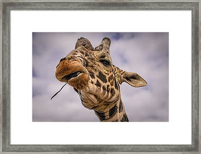 Thank You Framed Print by Mark Myhaver