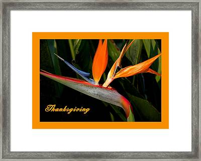 Thanksgiving Card Bird Of Paradise Framed Print