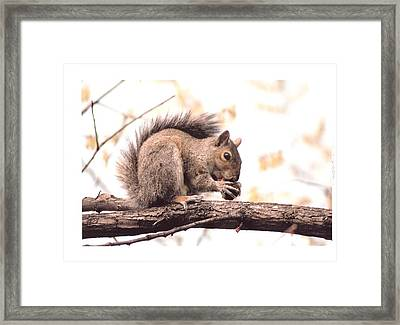 Thanksgiving Morning  Framed Print by Scott Ware