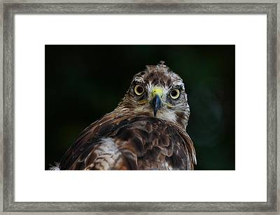 That Look Framed Print by Mike Farslow