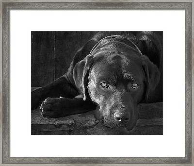 That Loving Gaze Framed Print by Larry Marshall