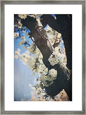 That March Framed Print by Laurie Search