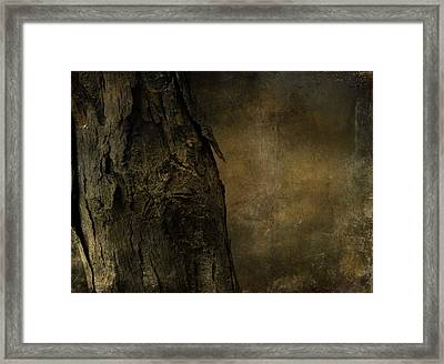 That Old Tree Framed Print by Dan Sproul