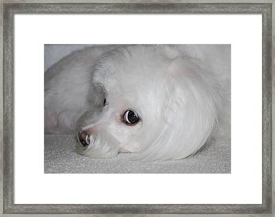 That Puppy Look Framed Print by Mary Beth Landis