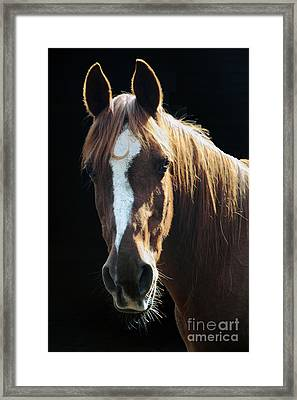 Flame - Will Be Missed Framed Print