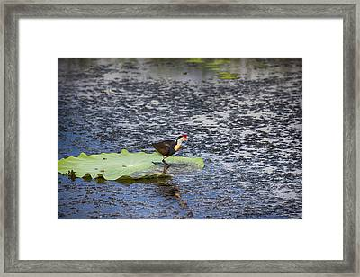 That Sinking Feeling Framed Print by Douglas Barnard