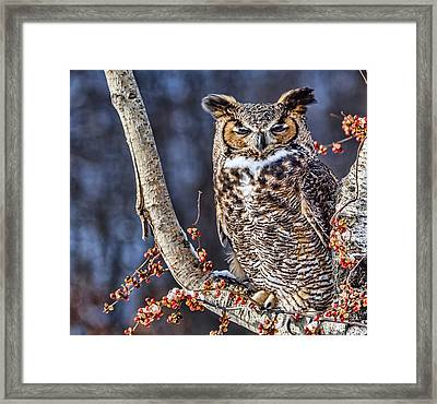 That Snow Is Bright Framed Print by Cindy Lindow