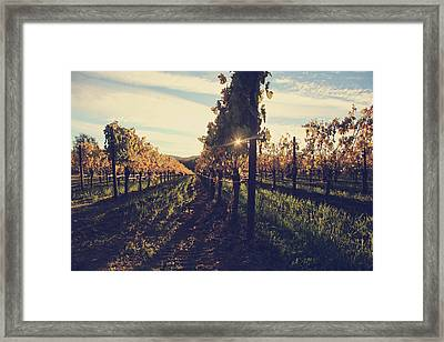 That Special Glow Framed Print by Laurie Search