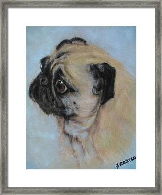 Pug's Worried Look Framed Print