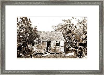 Thatched Building And Banana Plant, Possibly Nassau Framed Print