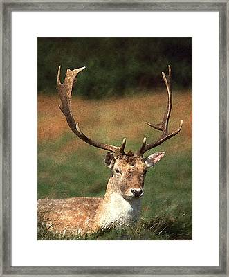 That's A Rack Framed Print