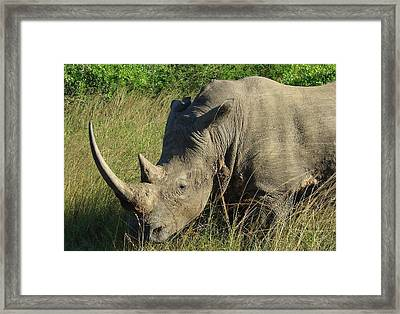 That's Close Enough Framed Print by Ramona Johnston
