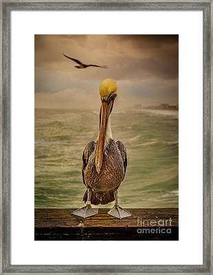 That's Mr. Pelican To You Framed Print by Steven Reed