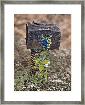 Thats Nuts  Framed Print by Tom Druin