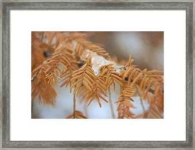 Thaw Framed Print by Fraida Gutovich