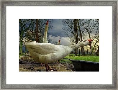 The 3 Geese Framed Print