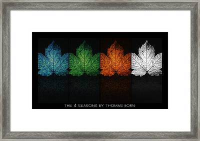 The 4 Seasons By Thomas Born Framed Print