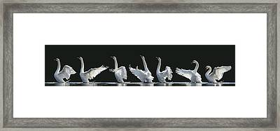 The 7 Swans Framed Print by Jeanette Rosenquist