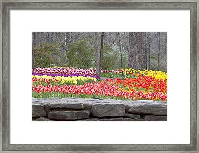 Framed Print featuring the photograph The Abundance Of Spring by Robert Camp
