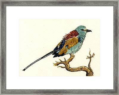The Abyssinian Roller Coracias Abyssinicus Framed Print by Juan  Bosco