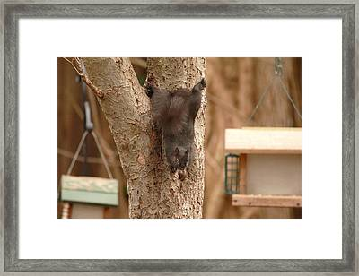 The Acrobat Framed Print by Frederic Vigne