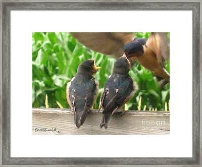 The Adult Barn Swallow Arrives With Lunch For One Framed Print by J McCombie