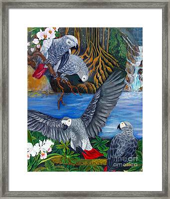 The African Grey Parrots Framed Print