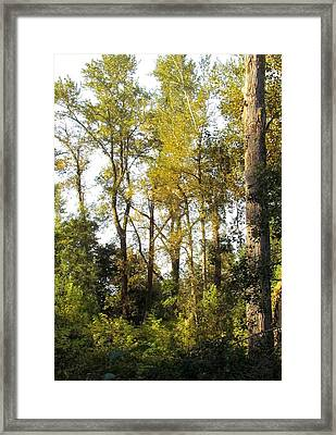 Framed Print featuring the photograph The Alder Grove by I'ina Van Lawick