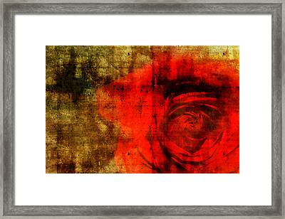 The Allure Of A Rose Framed Print