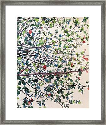 The Almond Tree Framed Print by Aditi Bhatt
