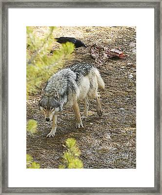 The Alpha Female Framed Print by Bob Dowling