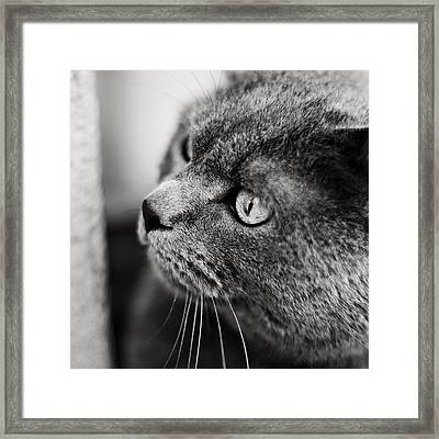 The Ambush Framed Print by Laura Melis