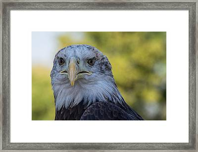 Framed Print featuring the photograph The American Eagle by Jeanne May