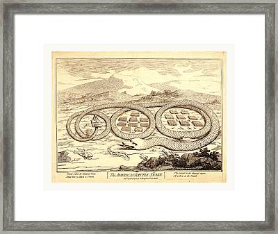 The American Rattle Snake, En Sanguine Engraving Shows Framed Print by Litz Collection