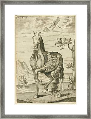 'the Anatomy Of A Horse Framed Print by Celestial Images