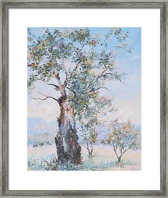 The Ancient Gum Tree Framed Print by Jan Matson