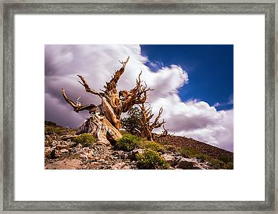 The Ancient Ones Framed Print