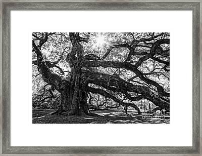The Angel Oak Bw Framed Print by Deborah Scannell