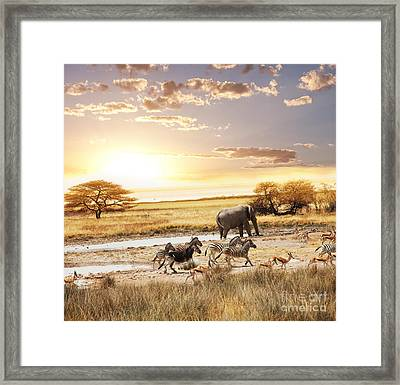 The Animals In Safari Framed Print by Boon Mee