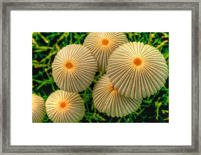 Framed Print featuring the photograph The Ants Raised Their Umbrellas by Dennis Baswell