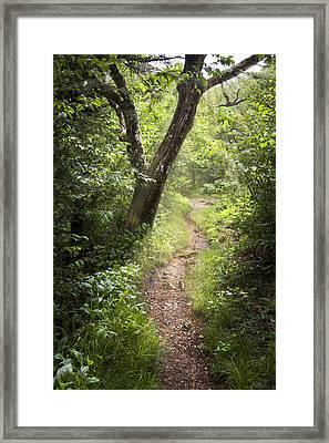 The Appalachian Trail Framed Print by Debra and Dave Vanderlaan