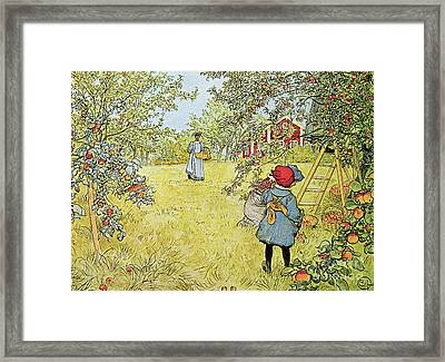 The Apple Harvest Framed Print by Carl Larsson