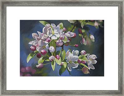 The Apple Tree Framed Print by Alecia Underhill