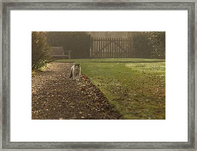 The Approaching Menace Framed Print