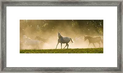 The Arabian Horse Framed Print by Andy-Kim Moeller