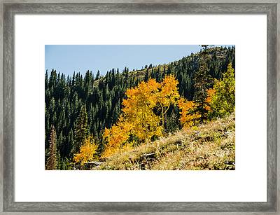 The Arch Framed Print by Sue Smith