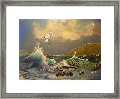 The Arctic Tern Framed Print