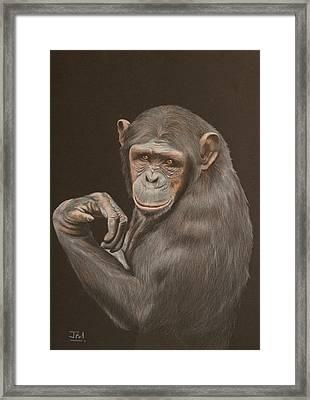 The Arm Wrestler - Chimpanzee Framed Print